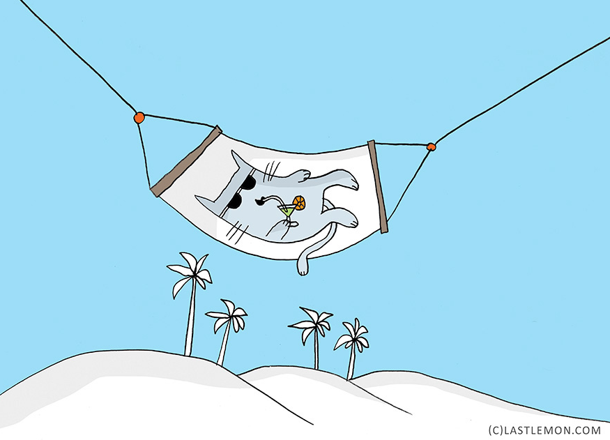 macka lezi na plazi i pije koktel