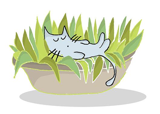 macka lezi u saksiji preko biljke