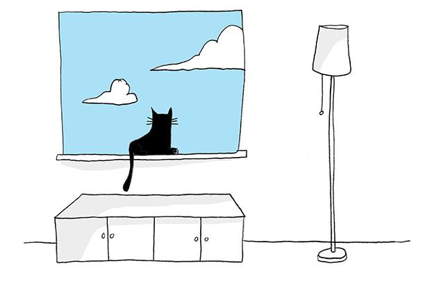 macka gleda kroz prozor